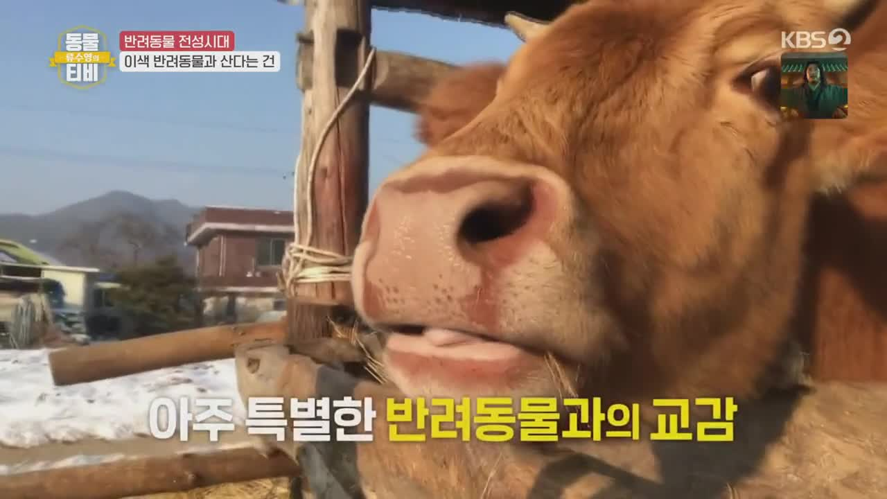 Animal TV 2021
